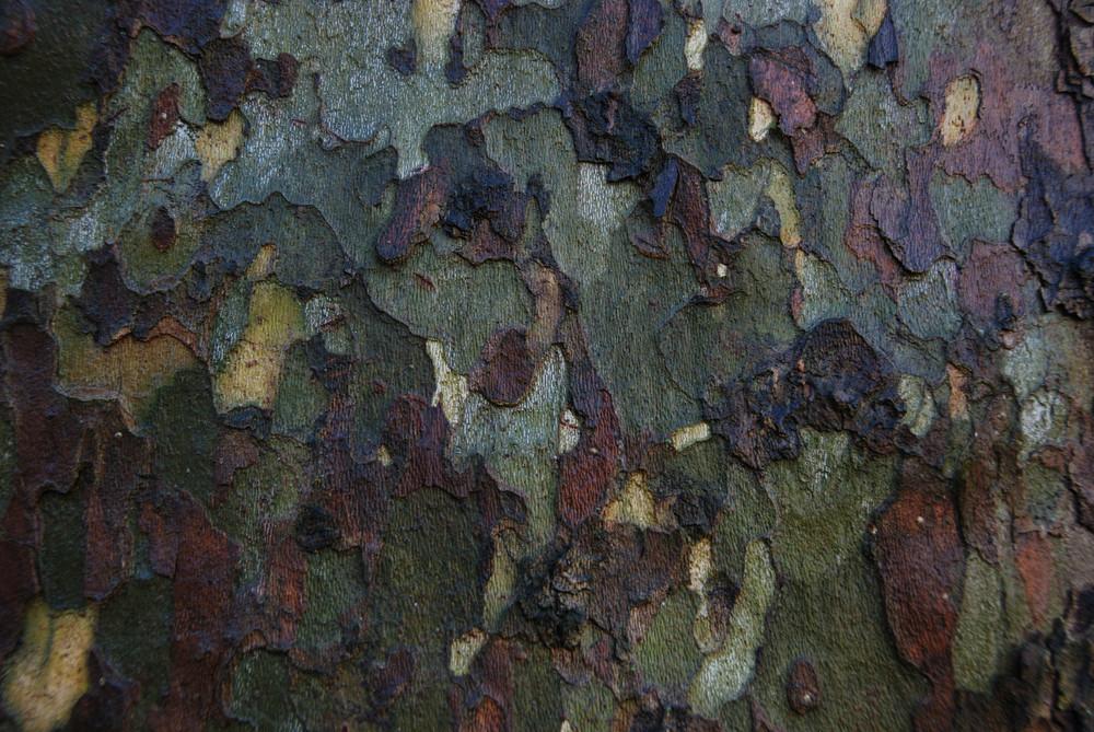 Un albero in ...mimetica