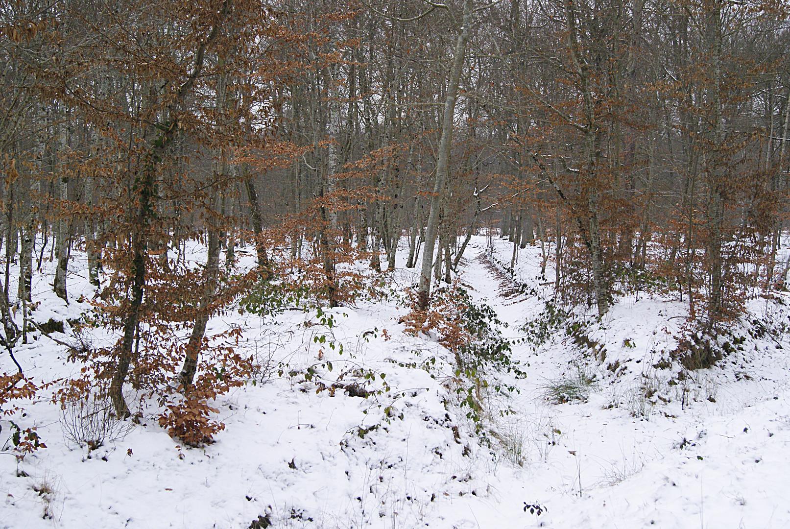un ambiance hivernale, forêt de fontaine bleau