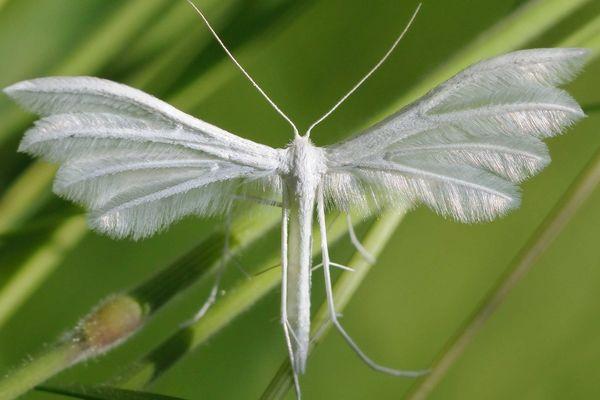 Un ange pause