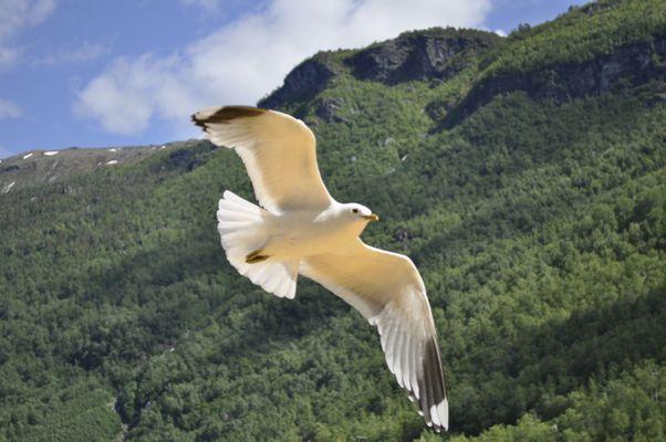 Un angelo tra i Fiordi