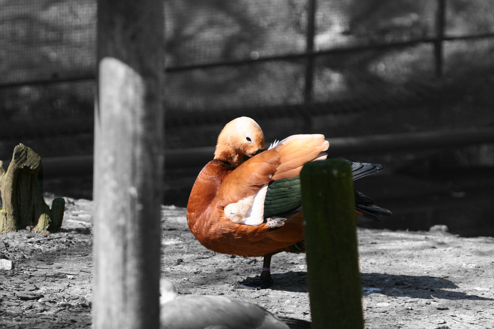 Un après midi au Zoo