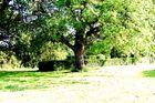 un arbre au debut de l'été