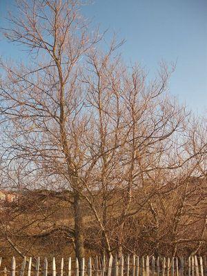 Un arbre !!