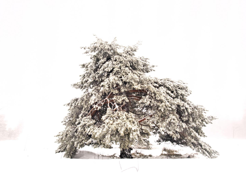 un arbre dans la neige - Ein Baum im Schnee