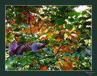 Un arbre de toutes les couleurs