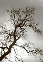 un arbre illuminé