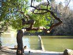 Un arbre sinueux au Parc des Buttes Chaumont