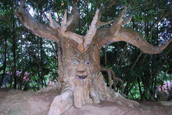 un arbre special