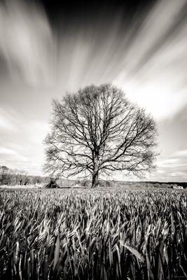 un arbre, un champ, la vie