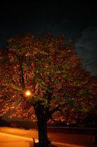 Un arbre, un soir, en automne....
