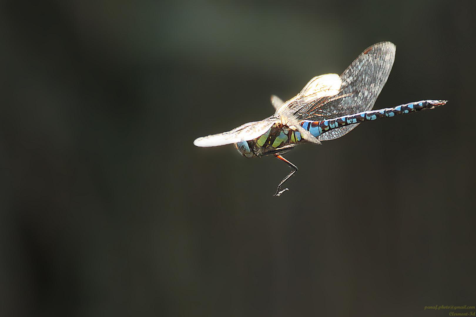 Un arc-en-ciel volant