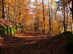 un automne d'or