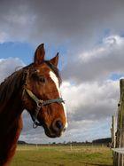 Un autre beau cheval