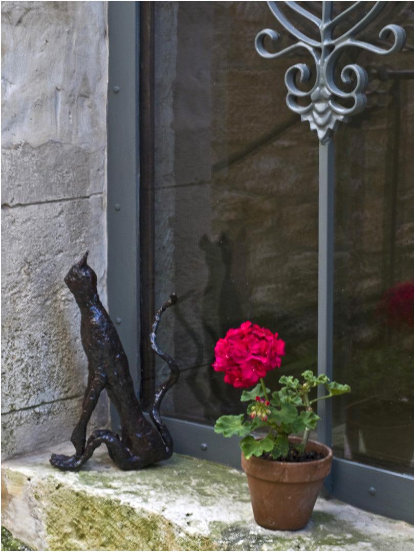Un autre chat à La Romieu