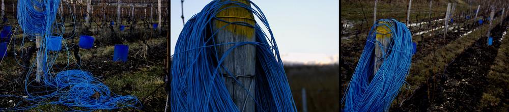 un autre jour, des vignes bleues