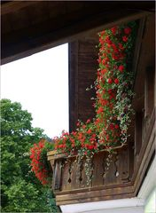 Un balcon florido con geranios rojos