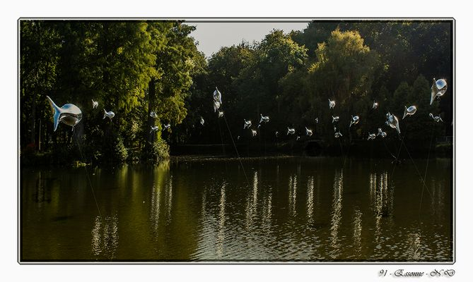 Un banc de poissons volants !!!