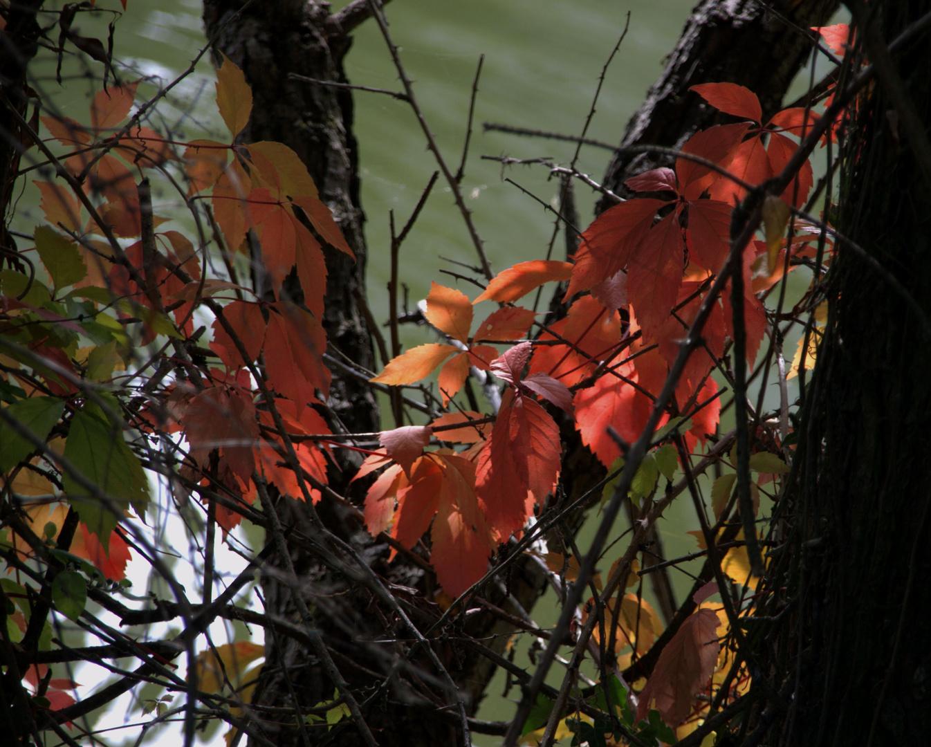 Un berceau de feuilles