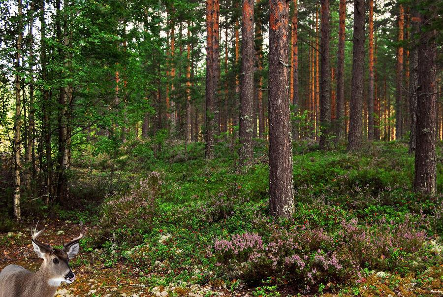 Un bosco per Lou