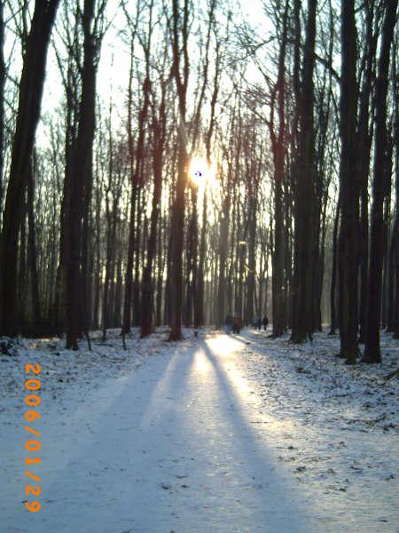 Un bosque alemán