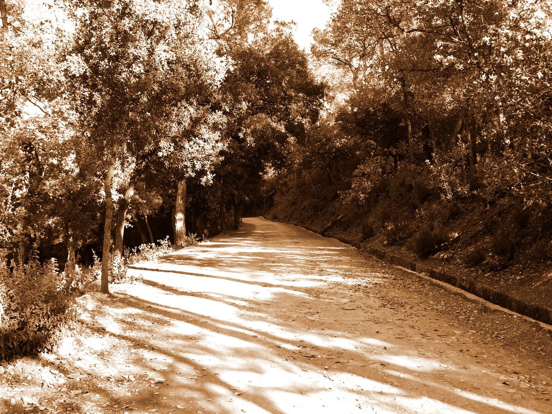 Un bosque parecido a años anteriores