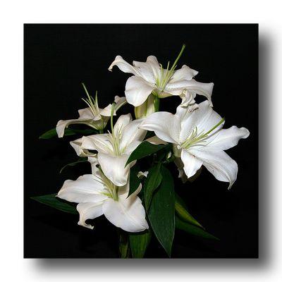 Un bouquet de Lys