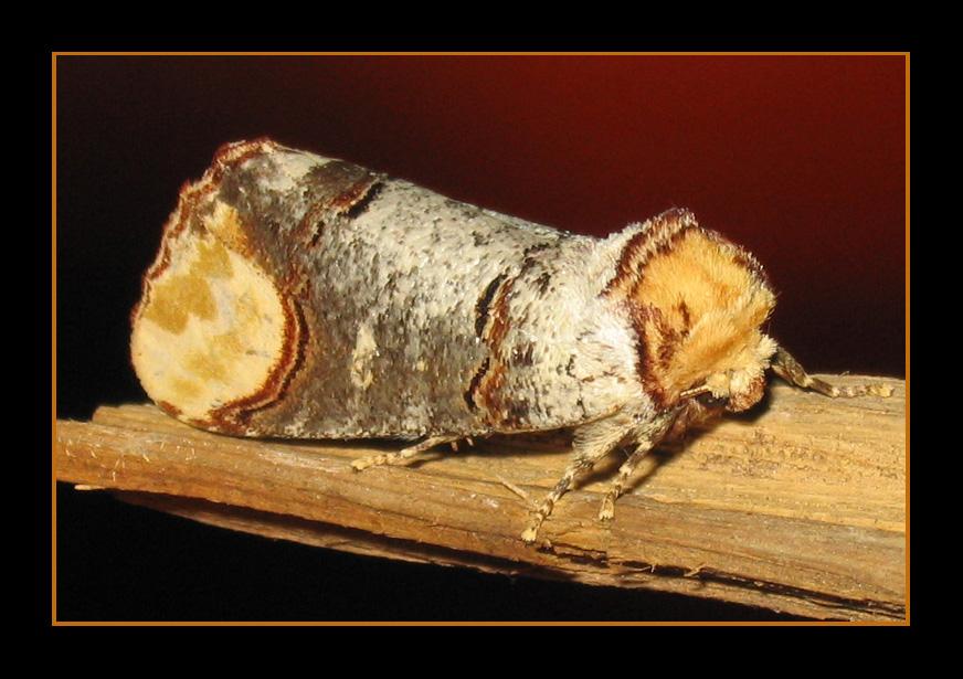 Un bout de bois...un bout d'écorce ?
