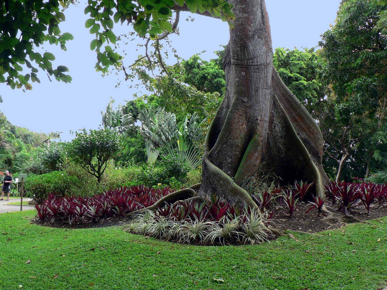un bout de jardin majestueux pour un bon WE à tous