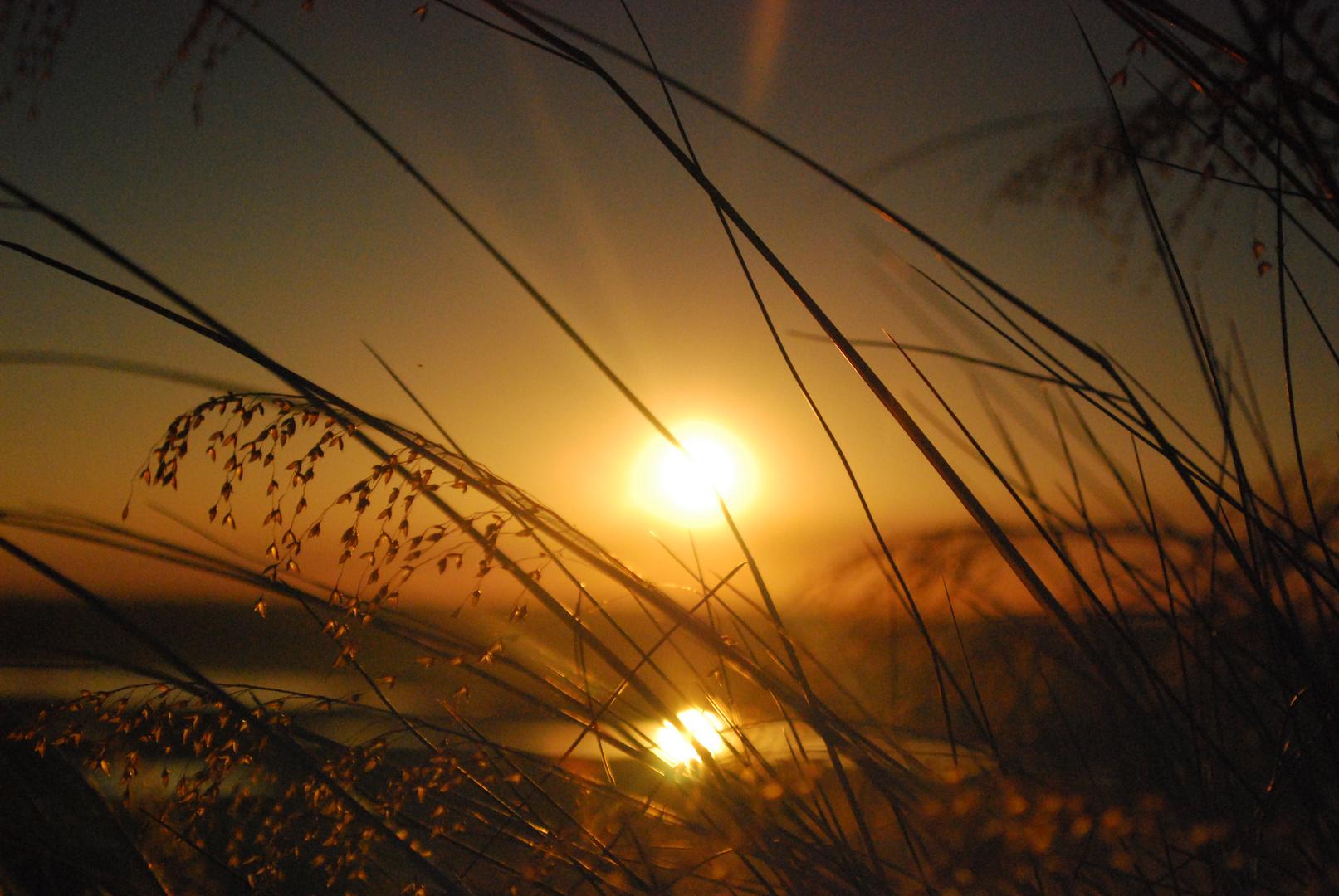 un brin de soleil