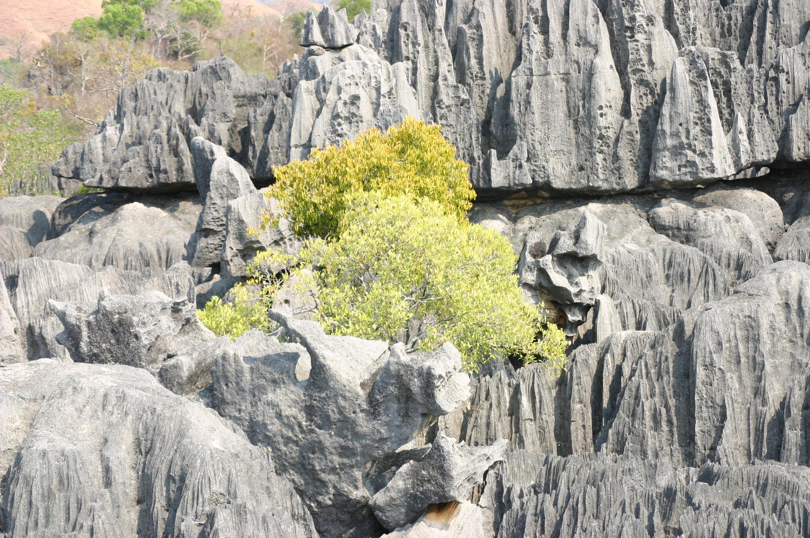 un brin de verdure en milieux rocailleux