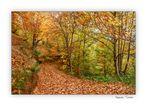 Un camino cubierto de hojas