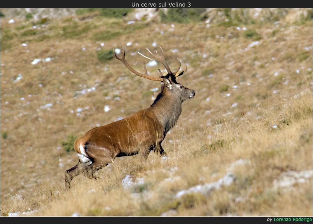 Un cervo sul Velino 3