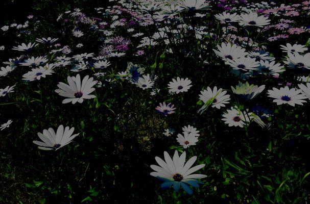 Un champs de fleur, pleins de bonheur .