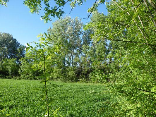Un champs et des arbres attirant le regard... Vers Montélimar