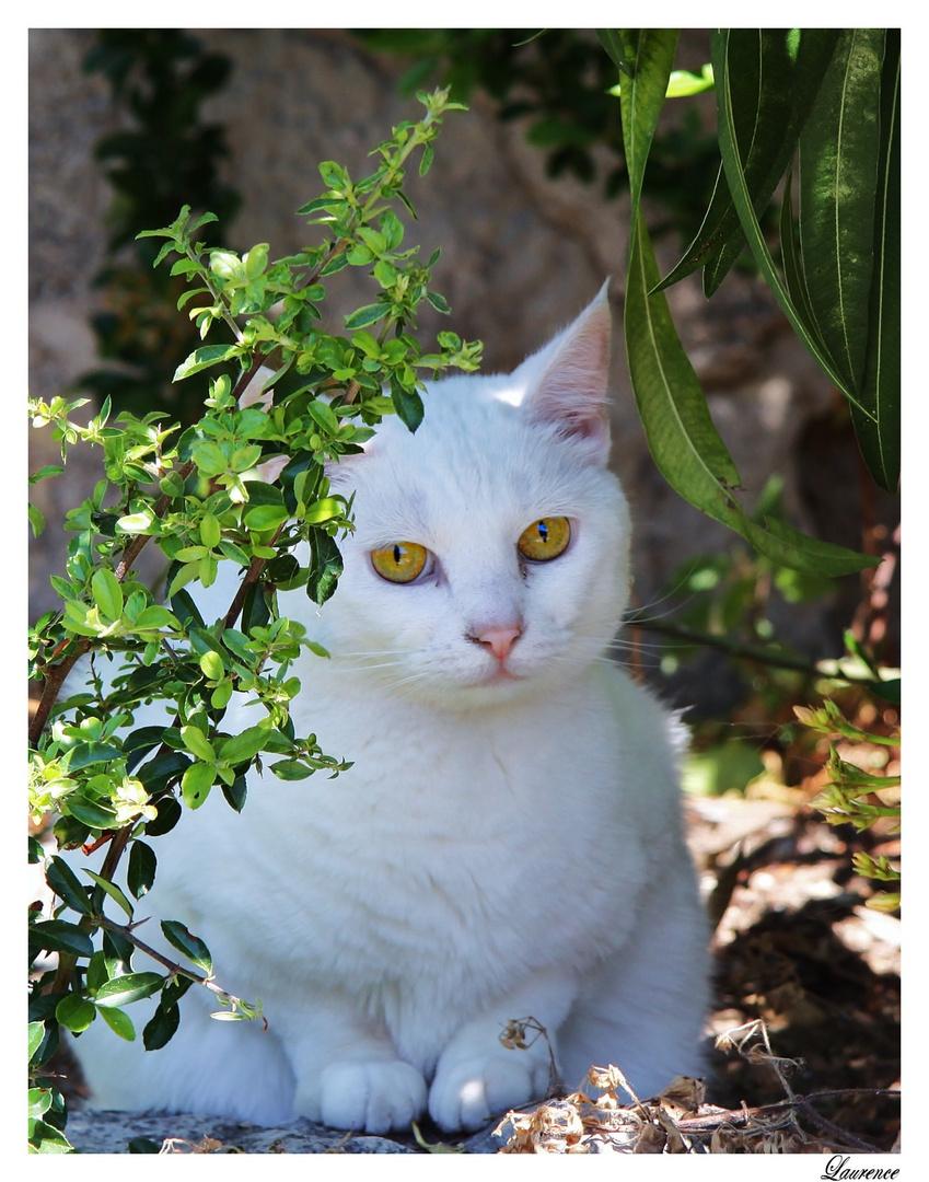 Un chat au coin d'une rue.