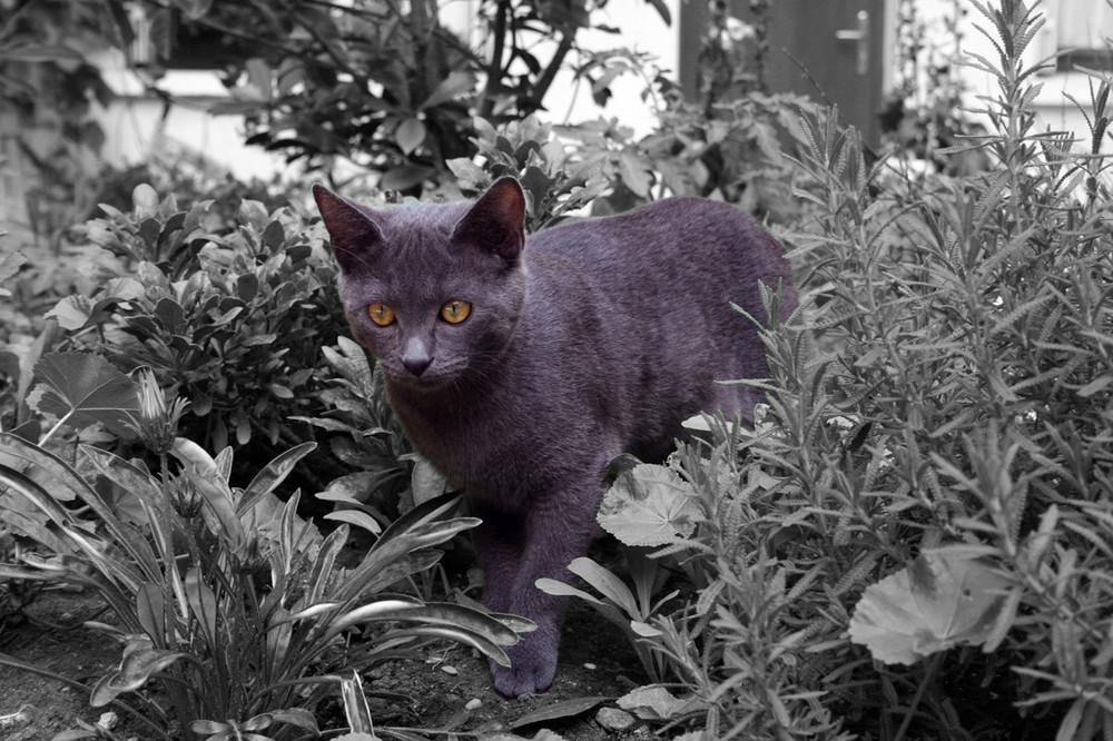 Un chat dans le jardin...