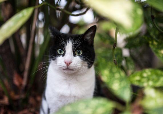 Un chat du cimetière du Père la Chaise