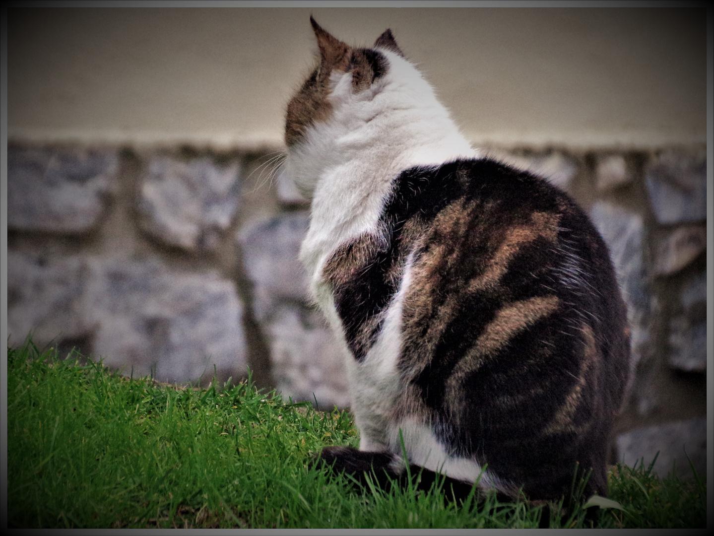 un chat  géant impassible .....