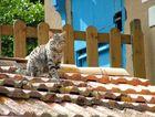 un chat sur le toit ....