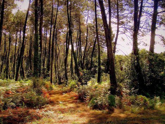 Un chemin dans la forêt...