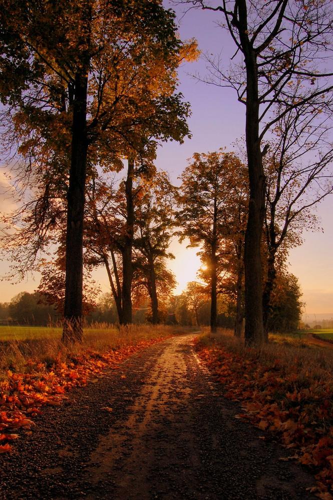 un chemin d'automne