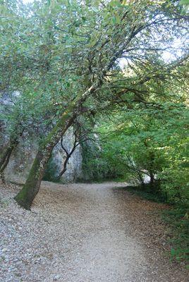 Un chemin perdu (la font-vive)