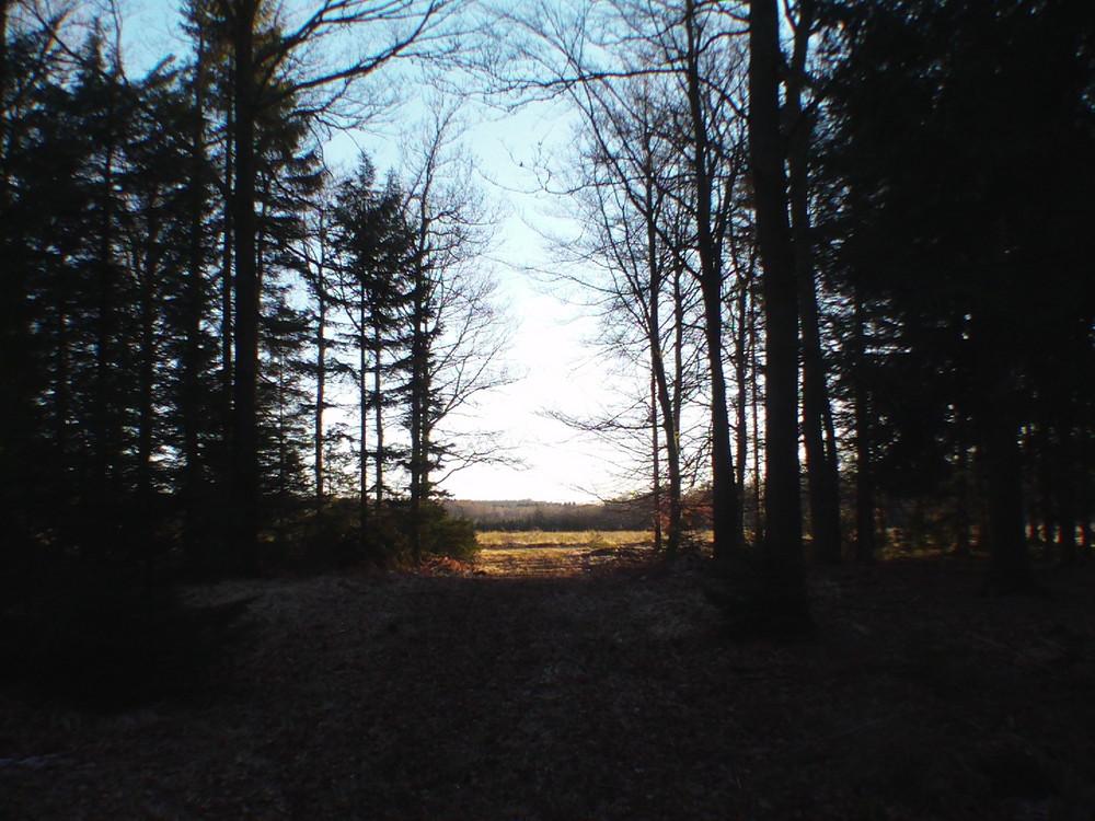 un chemin qui s ouvre sur le soleil