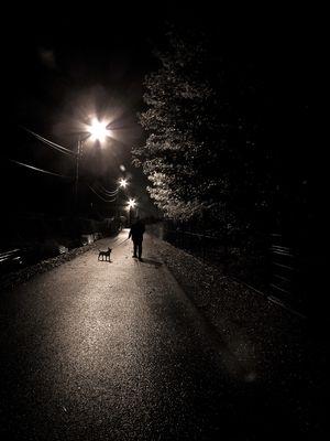 Un chien dans la nuit