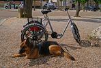 un chien de garde comme meilleur antivol!!!!