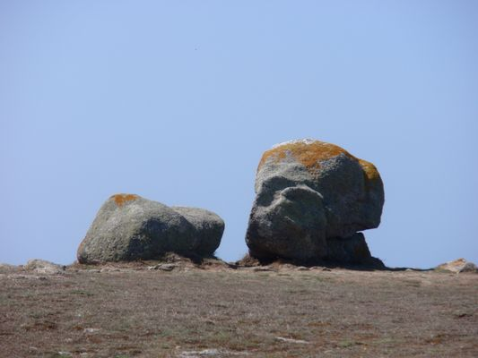 un chien ou une pierre ??