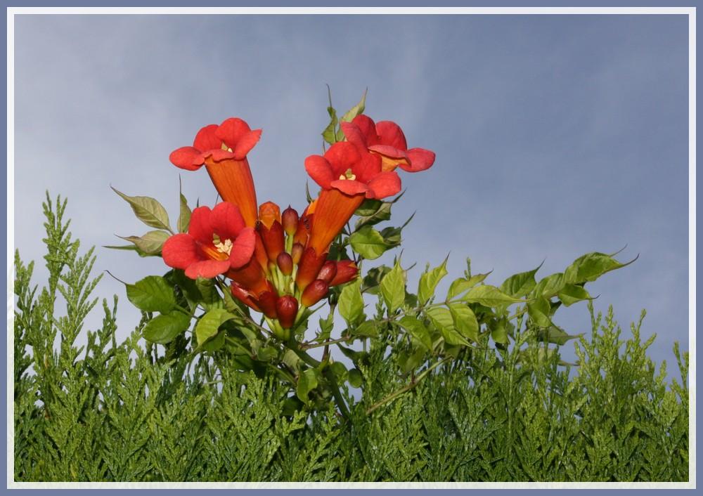 Un ciel, une fleur : une photo !!