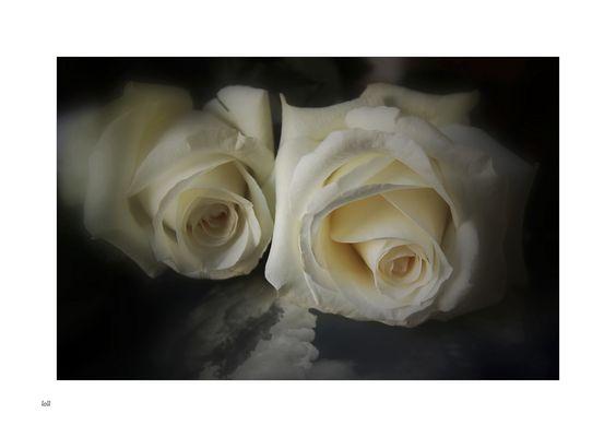 ...un cielo de...rosas...
