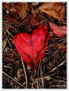 un coeur