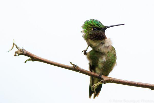 Un colibri en pleine réflexion !